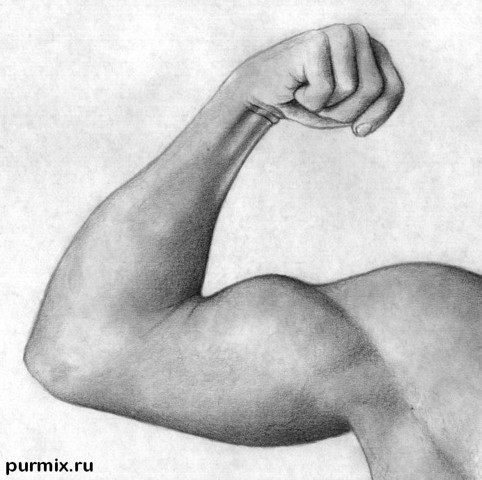 How to draw a biceps with a simple pencil step by step
