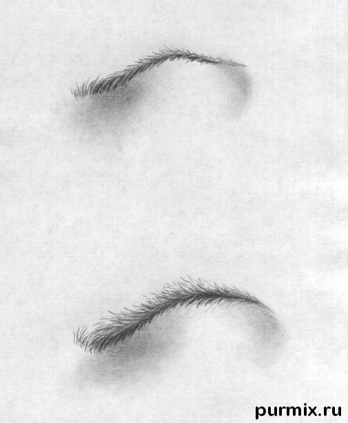 How to draw a female and male eyebrow with a simple pencil step by step