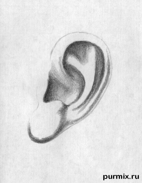How To Draw A Human Ear With A Simple Pencil Step By Step