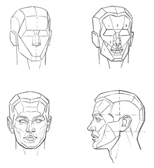 Drawing of the main and minor plans of the head