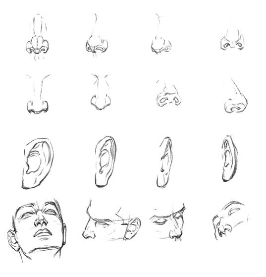 Lessons of drawing of a nose and ears.
