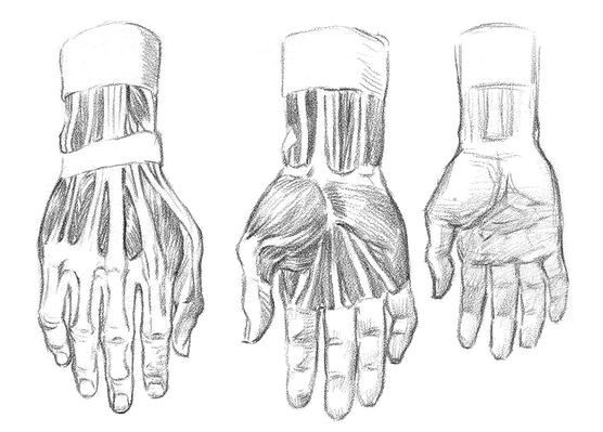Anatomy of hands