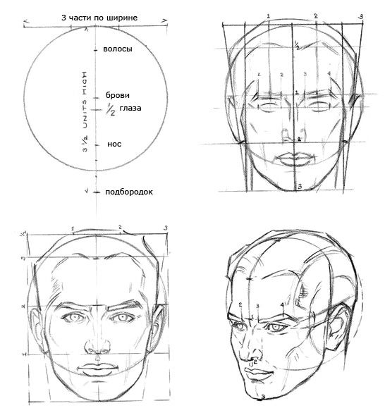 Proportions of the head of the man.