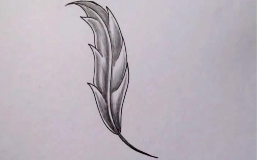 As it is beautiful to draw a feather with a pencil on paper step by step
