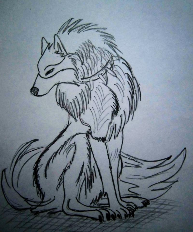 How to draw an anime of a wolf on paper with a pencil