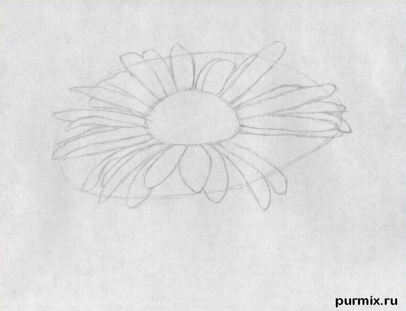 As it is simple to draw a camomile on paper with a pencil step by step 2