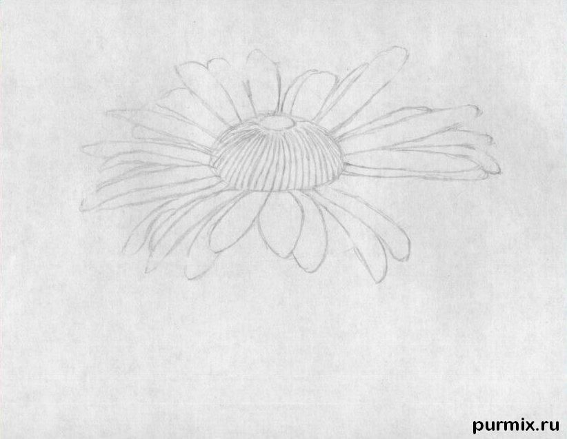 As it is simple to draw a camomile on paper with a pencil step by step 3