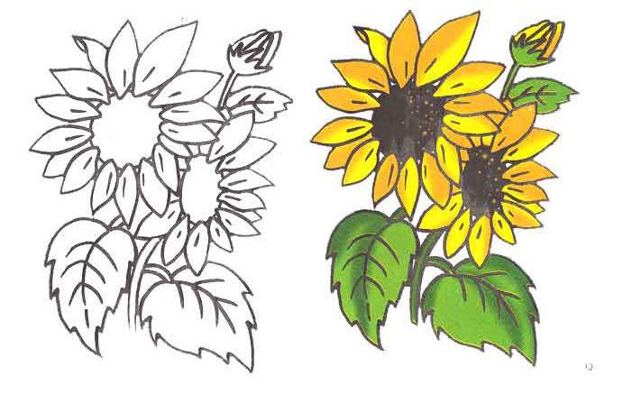 As it is simple to draw a sunflower with a pencil step by step