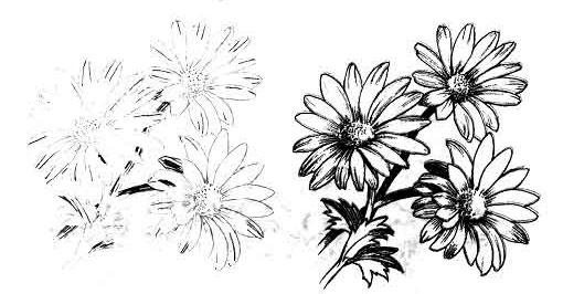 As it is simple to draw daisies with a pencil step by step