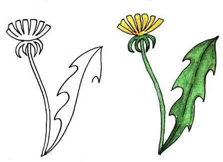 As it is simple to draw a dandelion with a pencil step by step