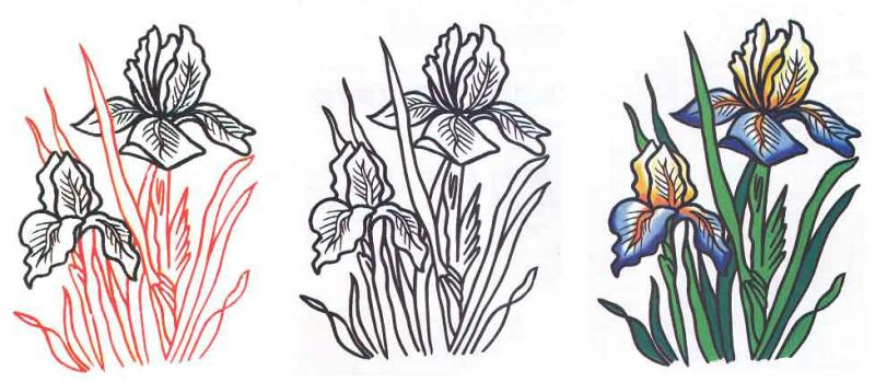 How to draw a flower an iris with a pencil step by step