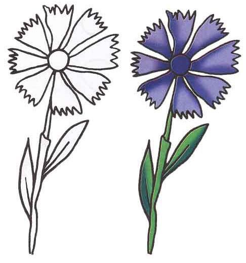 As it is easy to draw a cornflower with a pencil step by step