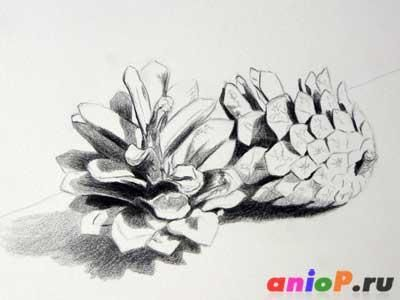 How to draw cepe on paper with a pencil step by step 4