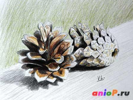 How to draw pine cones with colored pencils