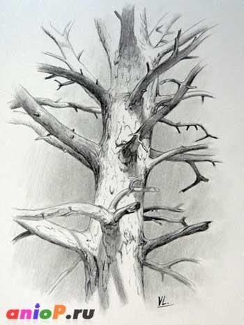 How to draw a pine trunk with a pencil step by step