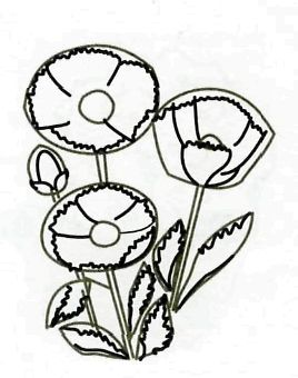 How to draw flowers: cornflower, hand bell and field carnation pencil step by step 2