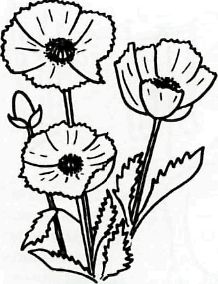 How to draw flowers: cornflower, hand bell and field carnation pencil step by step 3