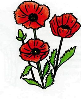 As it is simple to draw poppies with a pencil step by step