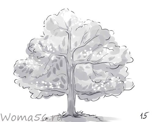 How to draw a tree with a pencil step by step