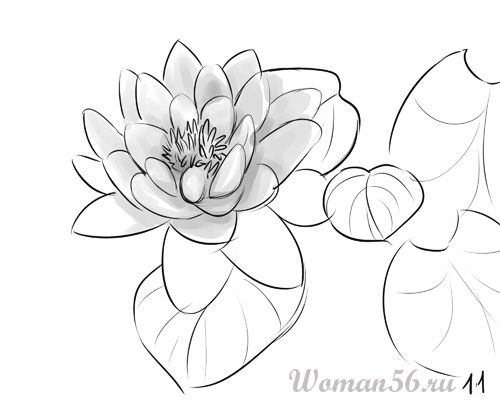 How to draw the Freesia with a pencil step by step 11