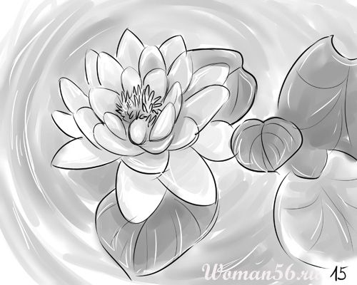 How to draw a flower the Lotus with a pencil step by step