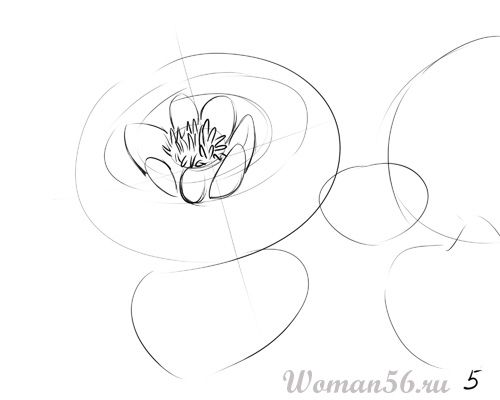 How to draw the Freesia with a pencil step by step 5