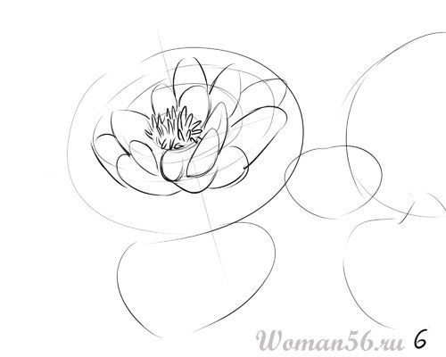 How to draw the Freesia with a pencil step by step 6