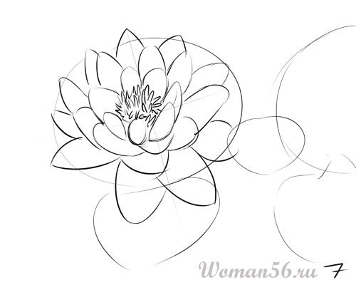 How to draw the Freesia with a pencil step by step 7