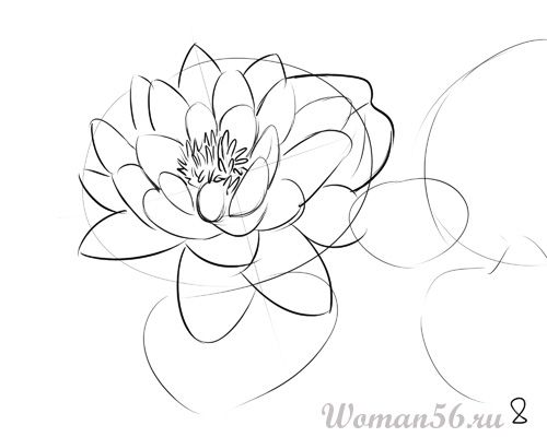 How to draw the Freesia with a pencil step by step 8