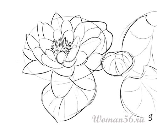 How to draw the Freesia with a pencil step by step 9