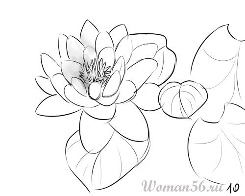 How to draw the Freesia with a pencil step by step 10