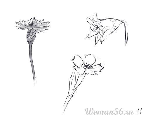 How to draw Gardenia with a pencil step by step 11