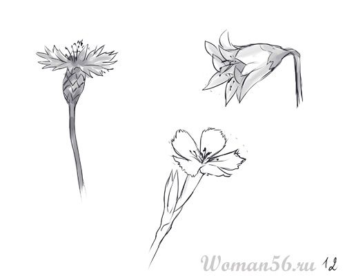 How to draw Gardenia with a pencil step by step 12