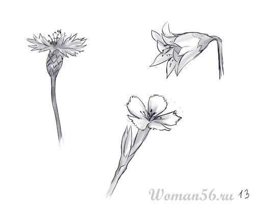 How to draw Gardenia with a pencil step by step 13