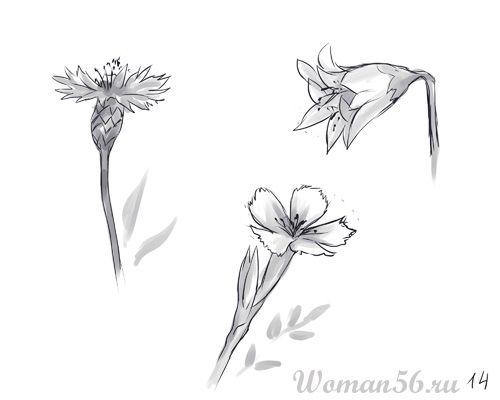 How to draw Gardenia with a pencil step by step 14
