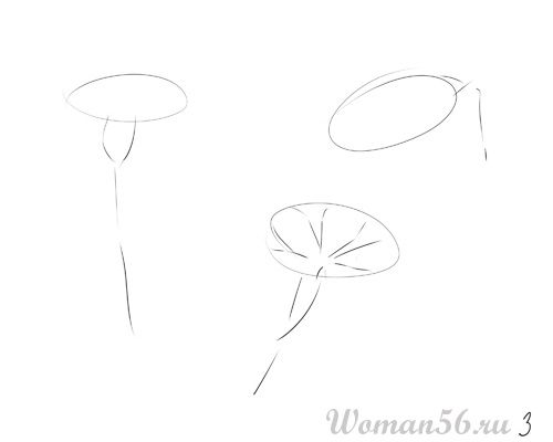 How to draw Gardenia with a pencil step by step 3
