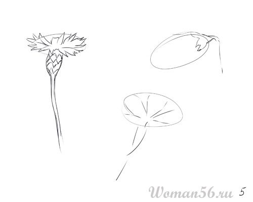 How to draw Gardenia with a pencil step by step 5