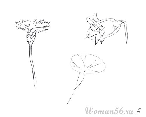 How to draw Gardenia with a pencil step by step 6