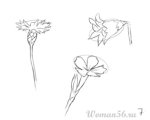 How to draw Gardenia with a pencil step by step 7