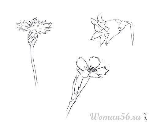 How to draw Gardenia with a pencil step by step 8