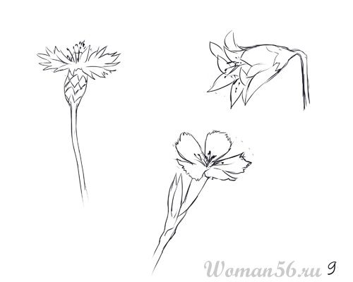 How to draw Gardenia with a pencil step by step 9