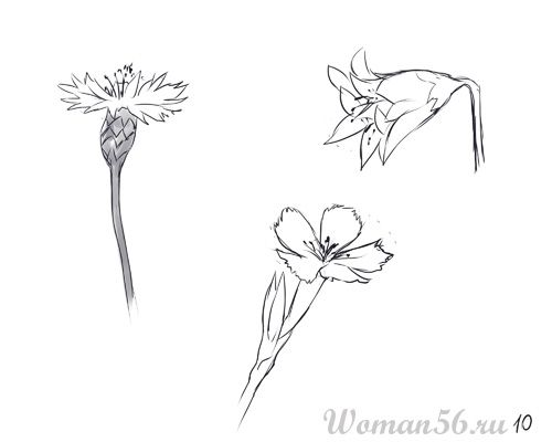 How to draw Gardenia with a pencil step by step 10