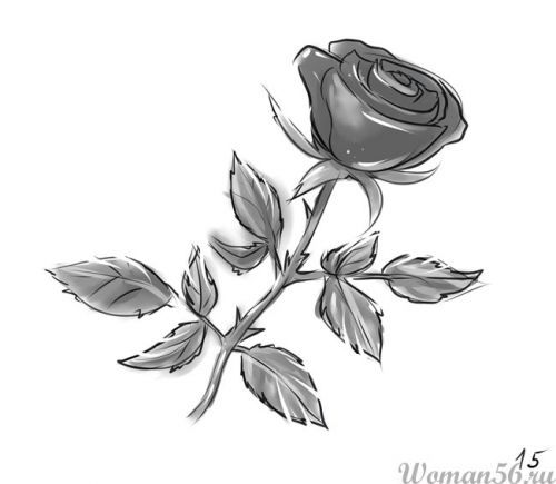 How to draw a rose with a stalk a pencil step by step