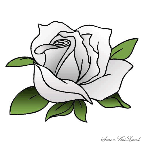 How to draw a white rose with a pencil step by step