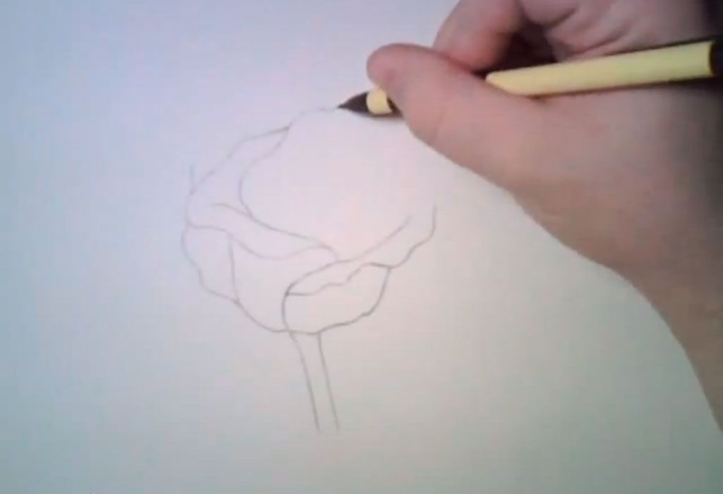 How to learn to draw poppies a pencil step by step 2