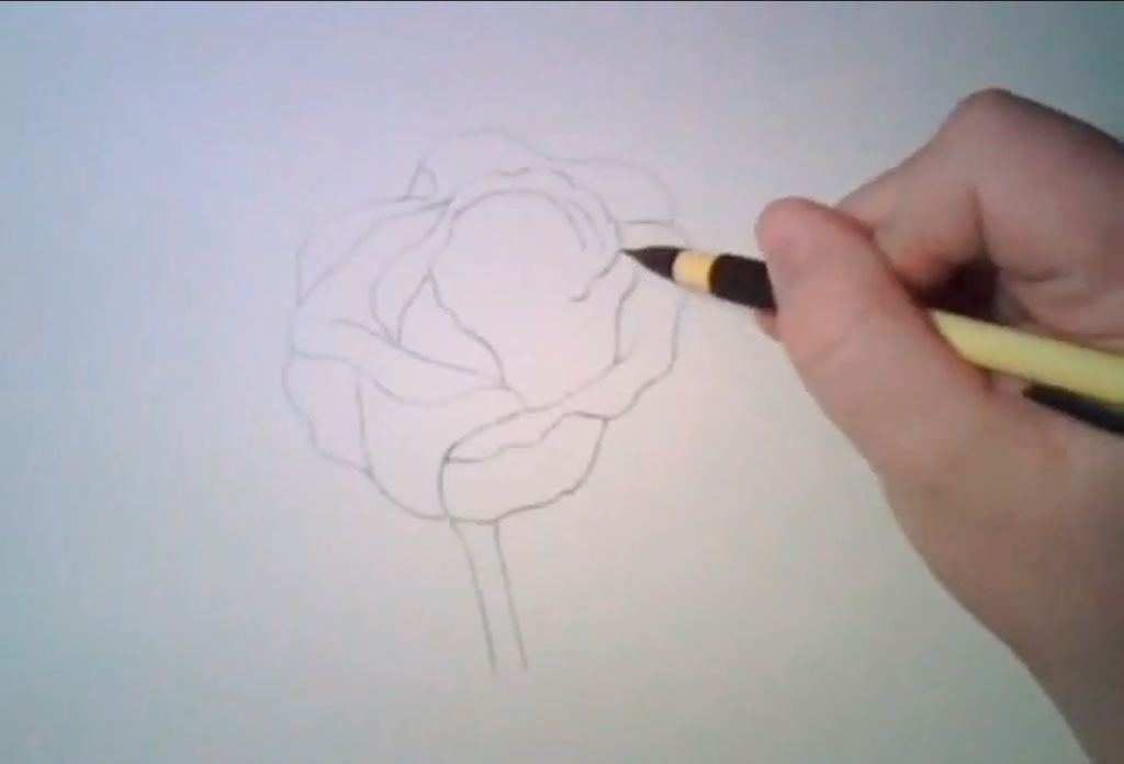How to learn to draw poppies a pencil step by step 3