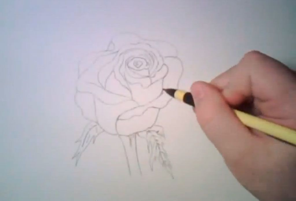 How to learn to draw poppies a pencil step by step 4