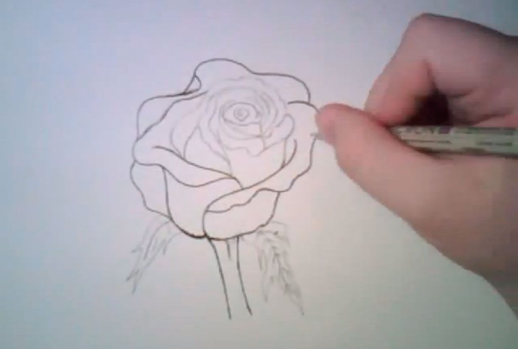 How to learn to draw poppies a pencil step by step 5