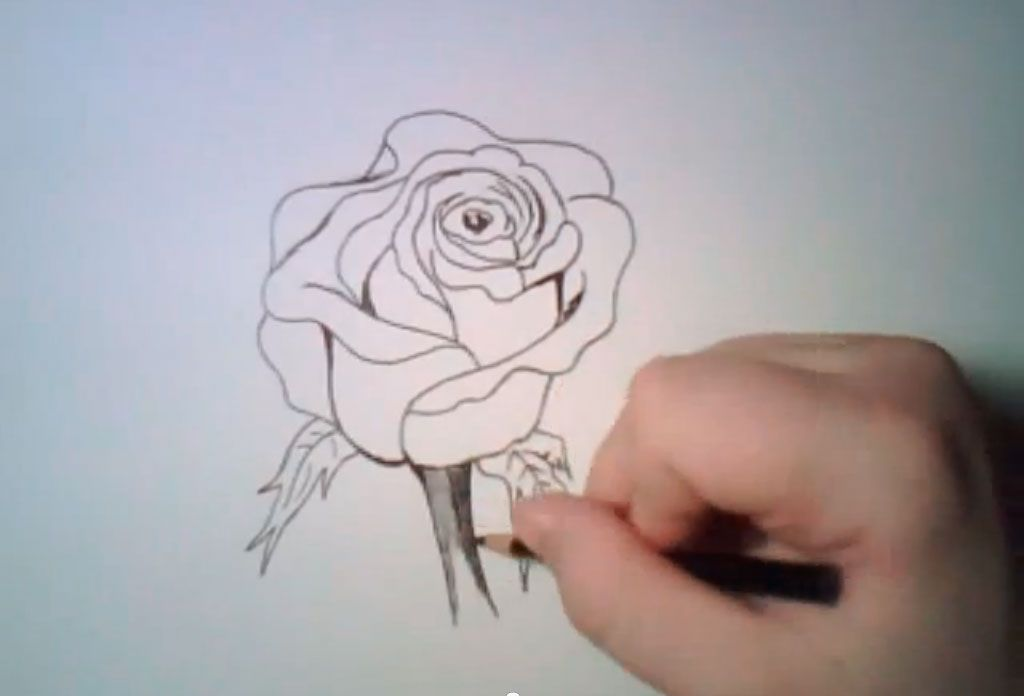 How to learn to draw poppies a pencil step by step 6