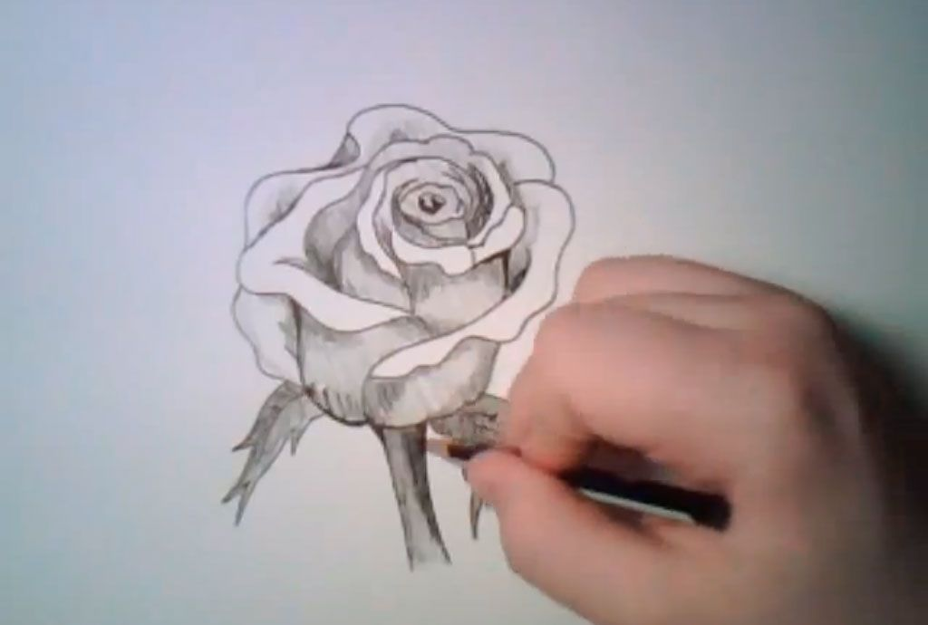 How to learn to draw poppies a pencil step by step 7